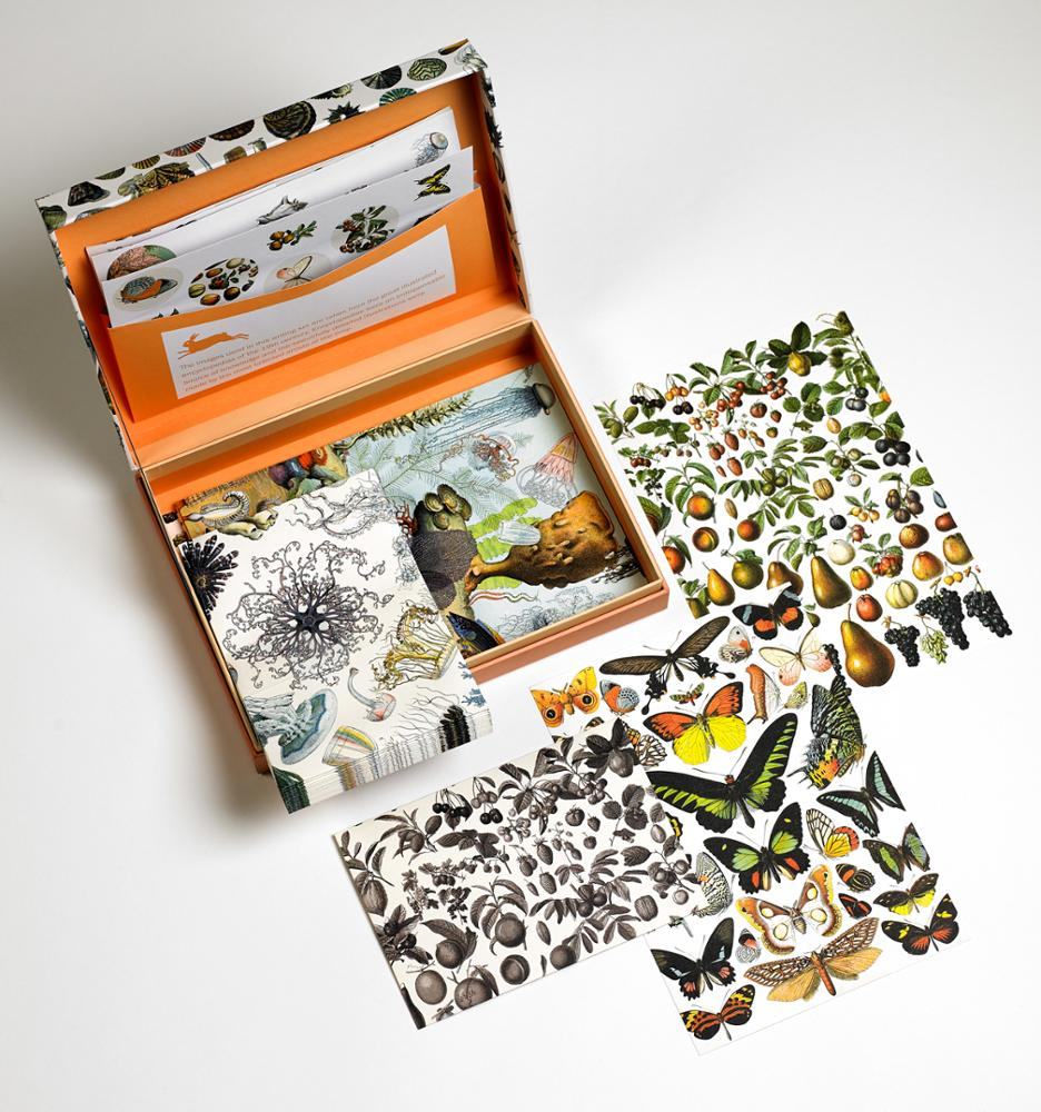 Set de Cartas Natural History Detalle